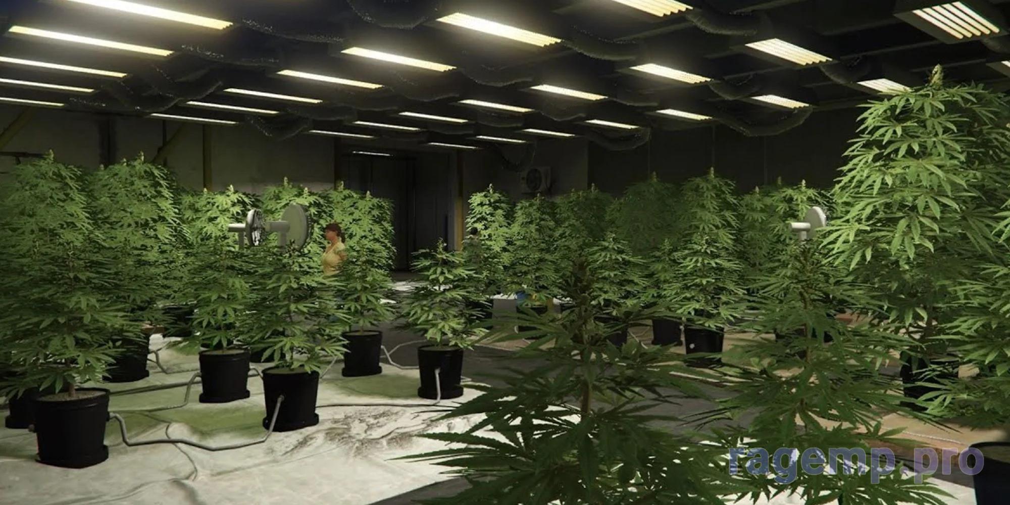 GTA-Online-Weed-Farm.jpg